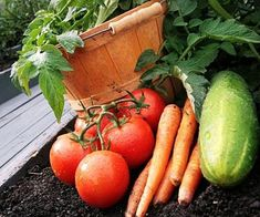 How To Plant A Garden - The Best Tips I've Seen Online For Growing Huge and Delicious Veggies At Home!