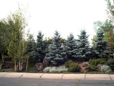 Staggered evergreens, ground cover, boulders. A densely planted berm. Exchange evergreens for something else.