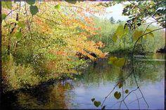 "Ross Barbera, Acrylic on Canvas, 36"" x 56"", 2004"