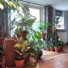 Who can resist a lush #plantgang ? Gathering your plants is also beneficial for them: they love the slightly higher air humidity levels in a group setting! :@bertusinterieur_style #urbanjunglebloggers
