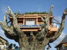 Restaurante de Okinawa é uma Casa na árvore