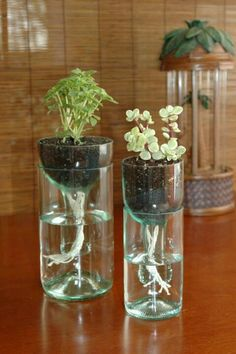Recycled wine bottles creates self watering planter