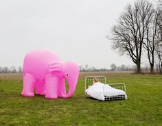©Jean-Baptiste Courtier - Elephant Rose - Fotografía | Photography