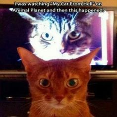 Funny Pictures Of The Day – 110 Pics