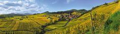 Slow Up sur la Route des Vins d'Alsace, le 2 juin 2013