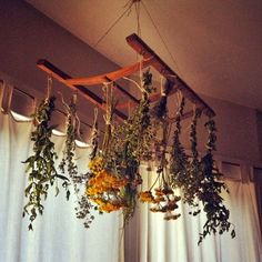 drying rack from the back of an old chair. ~ Dishfunctional Designs: The Upcycled Garden - April drying rack from the back of an old chair. ~ Dishfunctional Designs: The Upcycled Garden - April 2014 Herb Drying Racks, Drying Herbs, Herb Rack, Diy Décoration, Diy Crafts, Diy Garden, Upcycled Garden, Garden Ideas, Herbs Garden