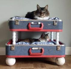 I LOVE this idea.  Next time I'm garage saling I need to find a cheap suitcase or two.  Hopefully our cats would use them.