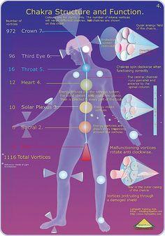 İnsan bedeninde 7 ana 12 tali enerji merkezi olmak üzere toplam 19 enerji merkezi bulunmaktadır. Bu merkezler vücutlarımıza belirli bir geometri ile yerleştirilmiş ve yaradılışın ana şablonu olan yaşam çiçeğini uyum içerisinde yansıtmaktadır.  Ana Çakralar: Kafanın üst kısmı (Taç) – Alın(üçüncü göz) – Boğaz – Göğüs kafesi(kalp) – Göbek üstü(solar pleksus) – Göbek Altı(sakral) – Perine (anüs ile üreme organı arasında) bulunmakla birlikte  Tali Çakralar: Kulaklar – Omuzlar – Dirsekler – Eller…