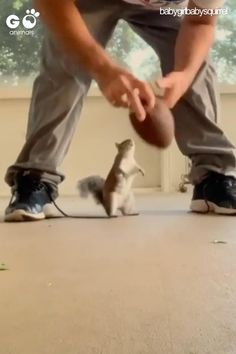 squirrel vs hooman : A viciously adorable match Funny Animal Memes, Funny Animal Pictures, Funny Pics, Cute Little Animals, Cute Funny Animals, Cute Squirrel, Squirrel Video, Baby Squirrel, Squirrels