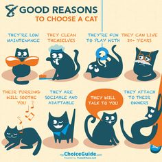 8 good reasons to get a cat and how to choose the right one. #cats #worthee