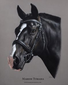 © 2014 All Rights Reserved - Marion Tubiana Horse Drawings, Realistic Drawings, Animal Drawings, Painted Horses, Oil Pastel Colours, Pastel Art, Pastel Paintings, Horse Artwork, Horse Paintings