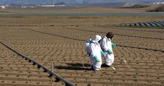 EPA - It's Time to Get Rid of Roundup! - Food & Water Watch Fund