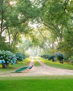 30 Images of Beautiful Interior Inspiration for the Last July Days . :: This Is Glamorous Beautiful Interiors, Beautiful Gardens, Beautiful Homes, Lush, Zen, Veranda Magazine, Mug Design, Inspiration Design, Garden Inspiration