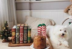 Enjoying the pawtastic Holiday vibes.  @adventureandpages #HappySocks #HappinessEverywhere #DogsofTwitter #HappyHolidays