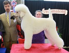 The German Trim - Poodle Forum - Standard Poodle, Toy Poodle, Miniature Poodle Forum ALL Poodle owners too!