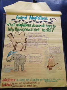 3rd grade science-Animal Adaptations