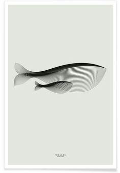 Andrea minini whale