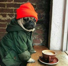 #dogs #animals #pug #pugs #puppies #coffee #cute