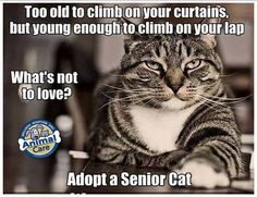 Adopt a Senior Cat . . . sweet
