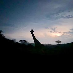 Another life changing experience on Thanda Safari Life Changing, Safari, Celestial, Sunset, Outdoor, Photos, Sunsets, Outdoors, The Great Outdoors