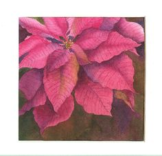 Passionate Pink Poinsettia Watercolor from my homepage.
