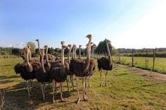 Startseite Animals, Pony Rides, Kid Birthdays, Camels, Petting Zoo, Types Of Animals, Kids Learning, Animales, Animaux