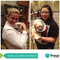 Pawsome! More than 70 dogs and cats, including Junie (left) and Lynx (right) found forever homes yesterday at ARIA Resort & Casino's employee adoption event! Huge thanks to all of the ARIA team members who opened their hearts and homes to our great shelter pets!
