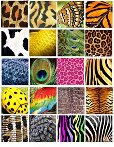 Idea for animal boards Animal Print Wallpaper, Emoji Wallpaper, Tile Patterns, Textures Patterns, Bottle Cap Projects, Animal Nail Art, Motifs Animal, Insect Art, Patterns In Nature