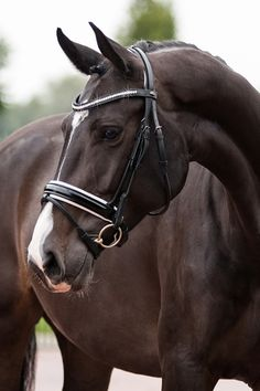 Anatomically shaped headpiece, patent leather, generous padding, and bling...need we say more? Shop the Milano at http://20x60.com/shop/premiera-milano-bridle-blackwhite