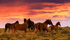 8. Wild horses live in families called Herds.  Herds stay together for food, protection, family fun and to help each other thru life. They are like our humans families in many ways....