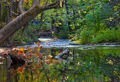 Big Chico Creek in Bidwell Park by Anthony Dunn Photography, via Flickr