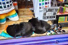 Scuola di viaggio a Portobello Road. A Portobello Road si vende di tutto ... ma questi non possiamo acquistarli!