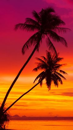 trendy ideas for travel background iphone phone wallpapers palm trees travel is part of Sunset wallpaper - Beach Wallpaper, Summer Wallpaper, Tree Wallpaper, Mobile Wallpaper, Beautiful Nature Wallpaper, Beautiful Sunset, Beautiful Landscapes, Unique Wallpaper, Palm Tree Sunset