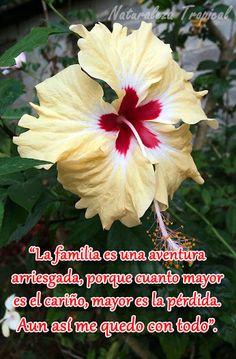 Ayerim Carrodeguas - Google+