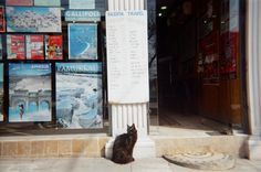 Cat outside travel agency, Istanbul, Turkey. March 2008