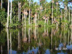 #Amazon #Brazil #Nature #Beauty #LatinAmerica #Travel