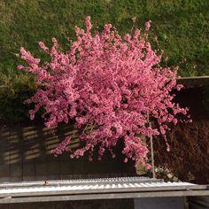 Nedanför min balkong