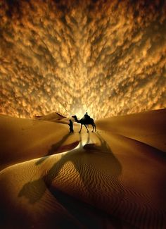 perfect sunset over a camel silhouetted against the sand.