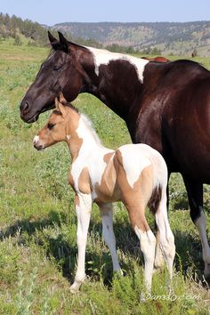 Black Hills Wild Horse Sanctuary #dan330 http://livedan330.com/2015/07/23/wild-horse-sanctuary-hot-springs-sd/