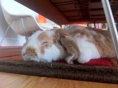 Bunny Having Surgery - September 13, 2011