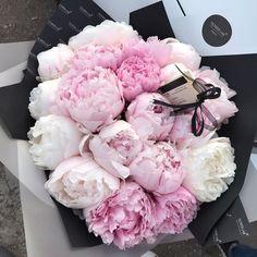 Peonias 😍 Amazing Flowers, My Flower, Beautiful Flowers, Flowers Nature, Spring Flowers, Luxury Flowers, Pink Peonies, Peony, Flower Aesthetic