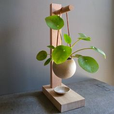 Hanging pilea in mixed clay mudpot planter with leather strapping on Australian hardwood timber stand