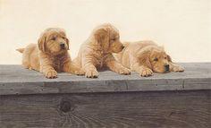Golden Retriever Puppies, John Weiss ANNIVERSARY EDITION CANVAS