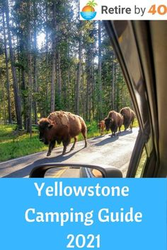 We went camping at Yellowstone for 5 nights. It was fantastic! If you like camping, you have to visit Yellowstone. #Yellowstone #roadtrip #travel via @retirebyforty Visit Yellowstone, Yellowstone Camping, Yellowstone National Park, National Parks, Camping Guide, Early Retirement, Holiday Fun, Frugal, Road Trip