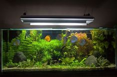 Image result for planted discus tank