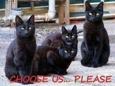 I'd take all four!!