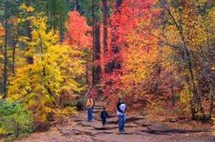 Arizona Fall Colors - where to see the leaves in White Mountains, Flagstaff, Sedona