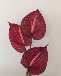 maggieontherocks plant
