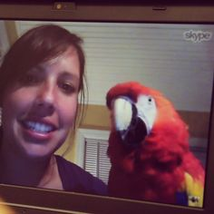 Polly want to Skype?