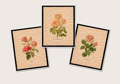 Farmhouse Decor Wall Art Prints, Pink Floral Artwork, Botanical Art Set of 3 Prints